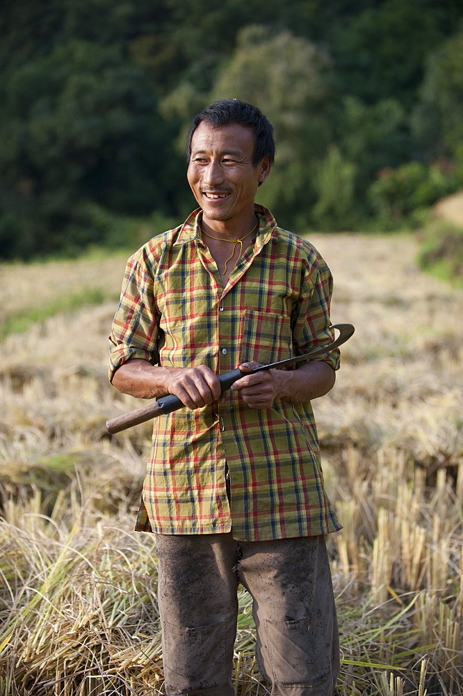 A man harvests rice with a sickle near Mongar in east Bhutan, Asia