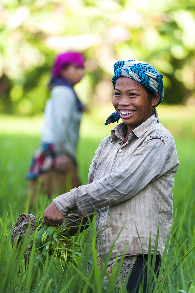 A girl clears weeds from the water in rice paddies, Bandarban, Chittagong Hill Tracts region, Bangladesh, Asia