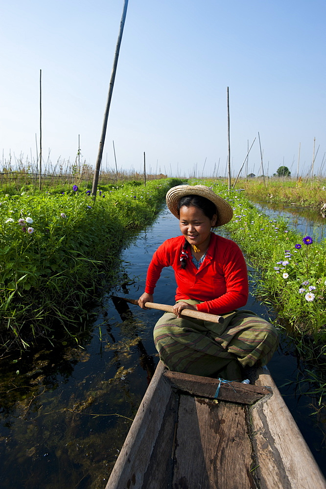 A woman paddles through the floating gardens on Inle Lake, Shan State, Myanmar (Burma), Asia