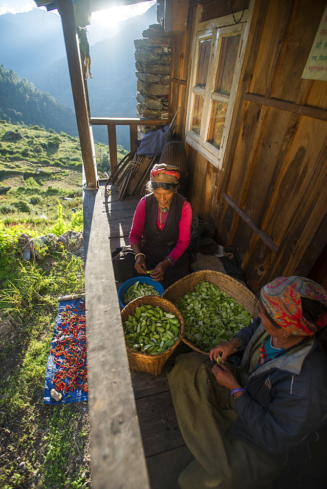 A Tamang woman peels little squashes in a small village called Briddim in the Langtang Region, Nepal, Asia
