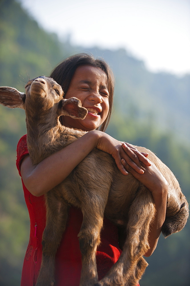 A little girl holds on to her goat, Manaslu Region, Nepal, Asia