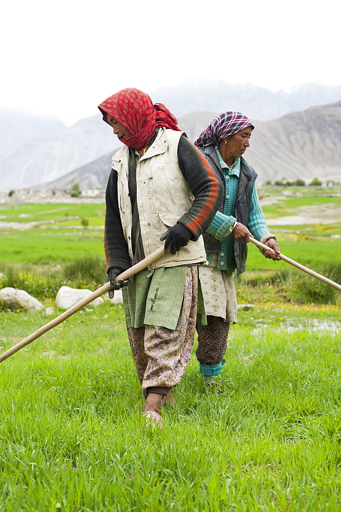 Women work with irrigation tools even the flow of water into their wheat field