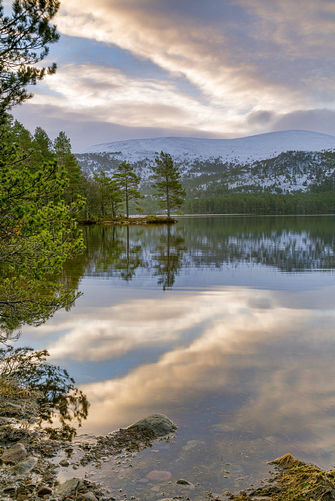 Crystal clear water and pine trees reflected in Loch an Eilein, The Cairngorms, Scotland, United Kingdom, Europe