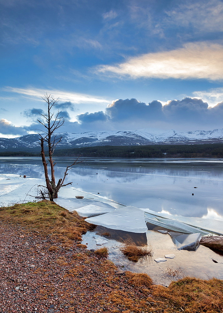 Ice sheets in severe winter weather on Loch Morlich, at daybreak, in the Badenoch and Strathspey area of Highland, Scotland, United Kingdom, Europe, Europe - 1228-152