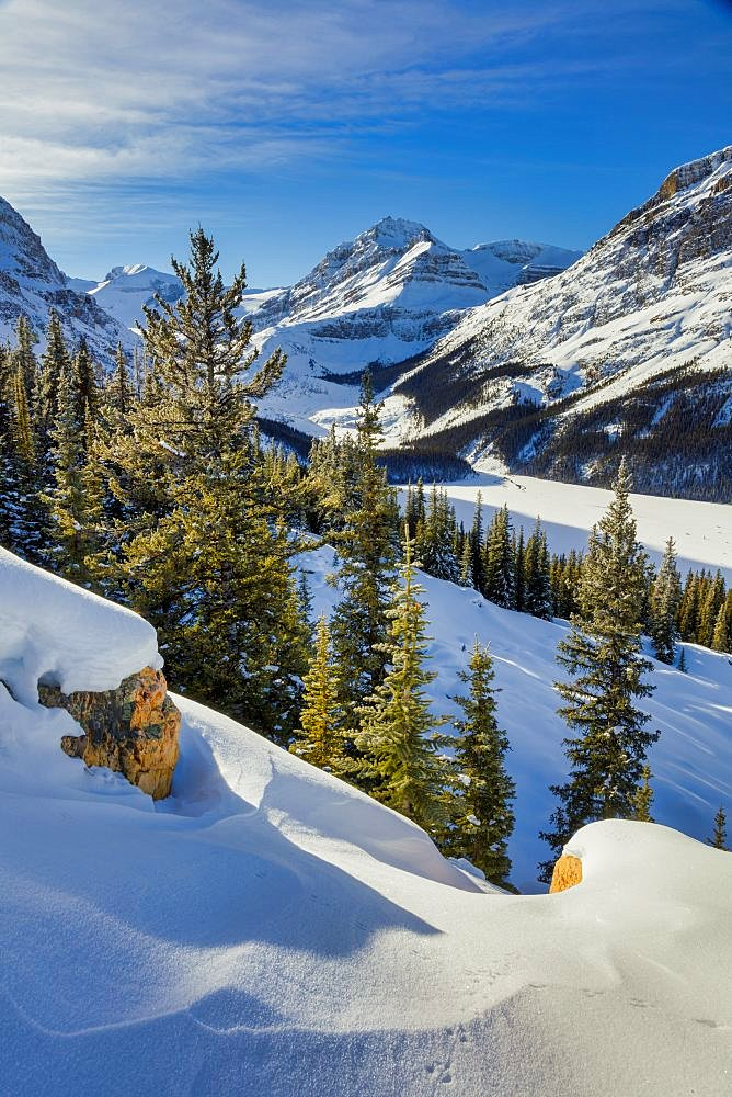 Spruce trees and mountains at Lake Peyto Banff National Park Alberta Canada