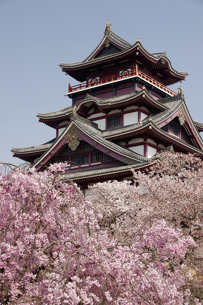 Momoyama castle during cherry blossom season, Kyoto, Japan, Asia - 1238-102