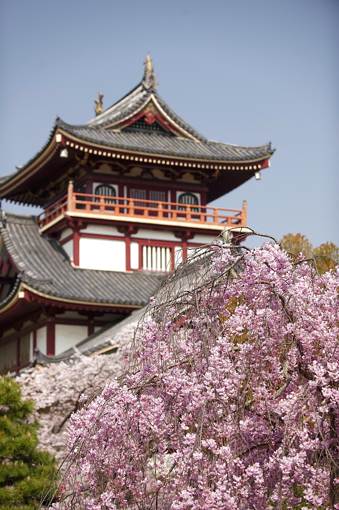 Momoyama castle during cherry blossom season, Kyoto, Japan, Asia - 1238-108