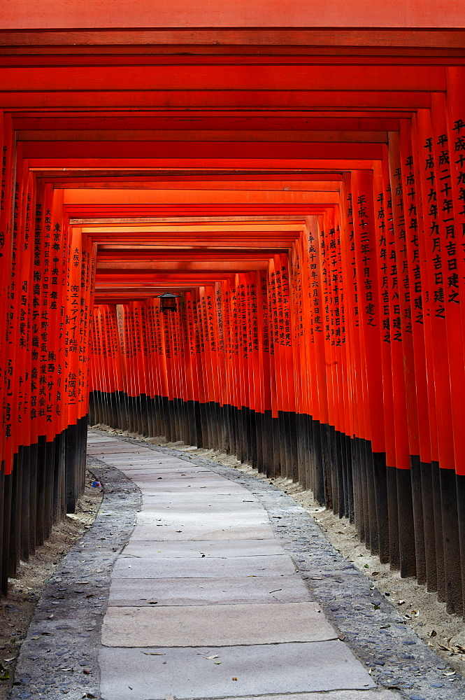Path under red torii in Fushimi Inari shrine, Kyoto, Japan, Asia - 1238-116