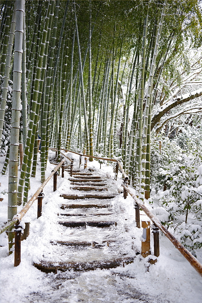 Snowy path in bamboo forest, Kodai-ji temple, Kyoto, Japan, Asia - 1238-32