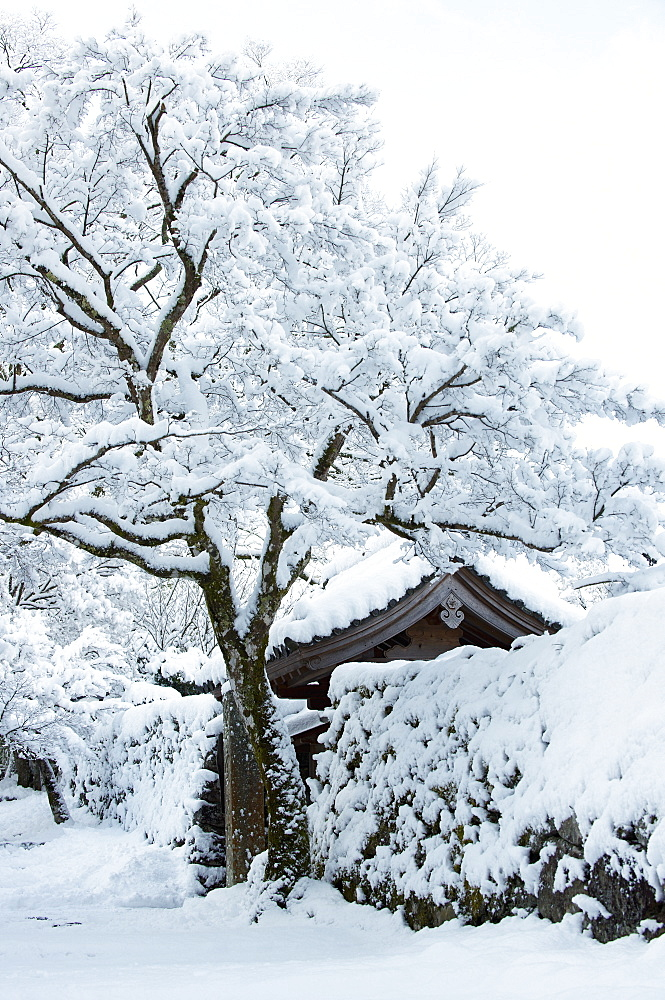 Fresh snow on Jikko-in Temple entrance, Ohara valley, Kyoto, Japan, Asia - 1238-49