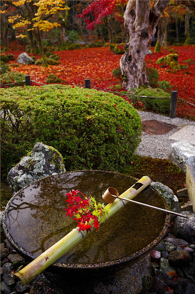 Tsukubai water basin with autumn decoration, Enko-ji temple, Kyoto, Japan, Asia - 1238-73