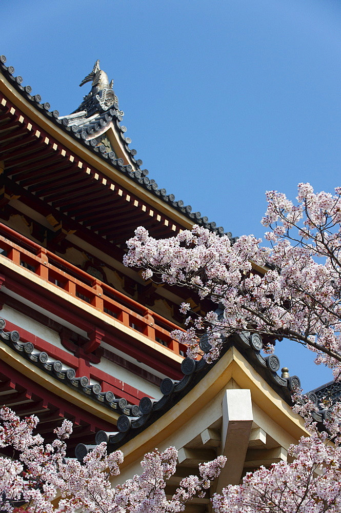 Momoyama castle during cherry blossom season, Kyoto, Japan, Asia - 1238-82