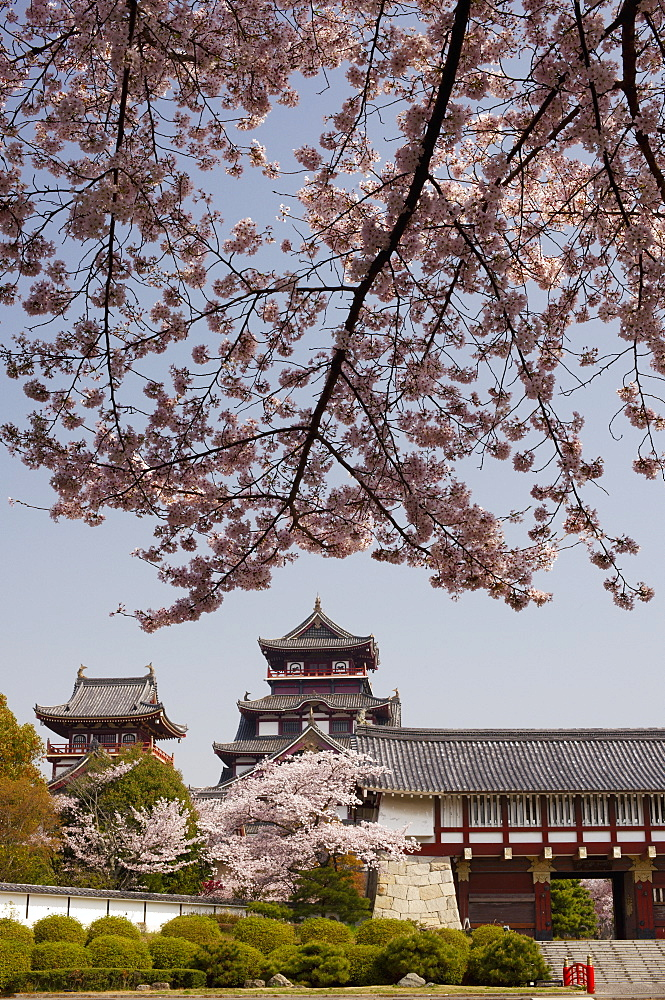 Momoyama castle during cherry blossom season, Kyoto, Japan, Asia - 1238-90