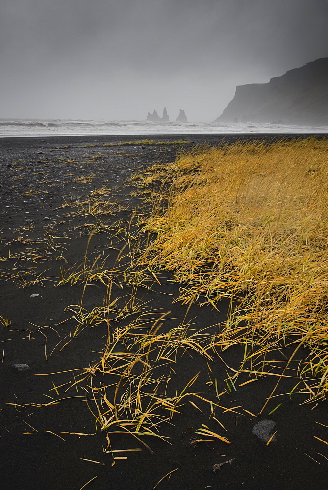 Basalt rock formations (sea stacks) and black sand beach in Vik, Iceland, Polar Regions
