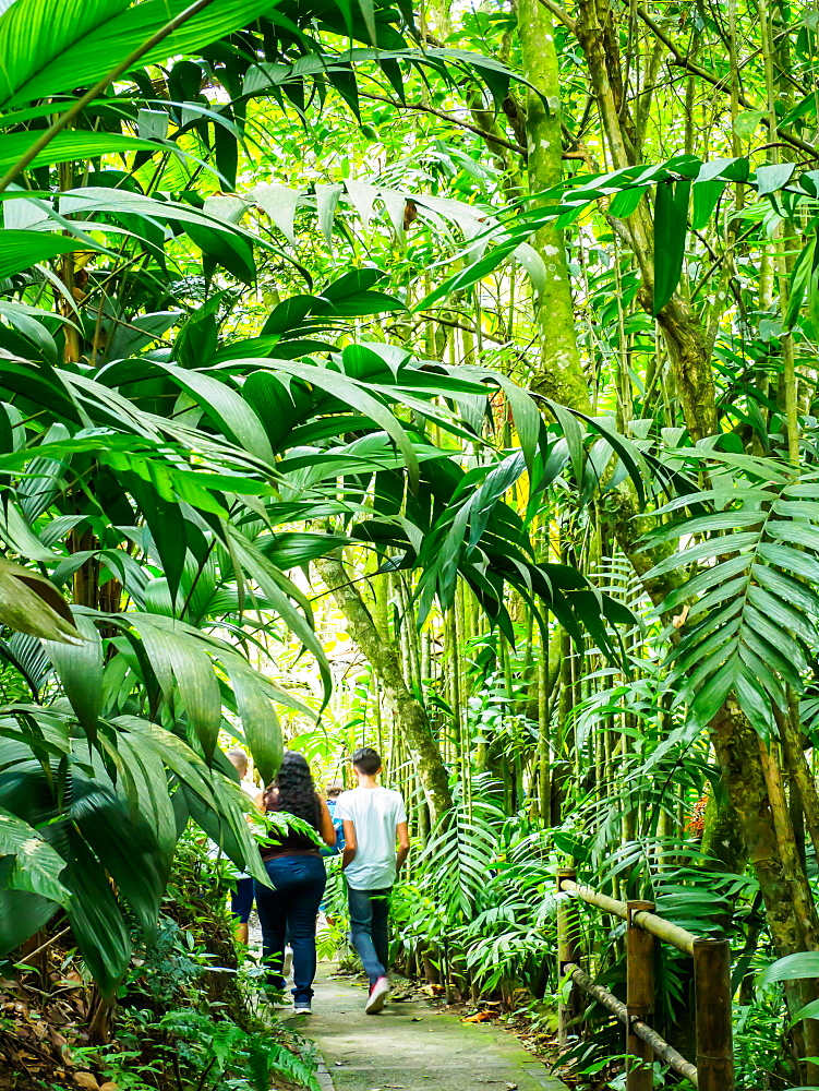 Walking through the Quindio Botanical Garden, Armenia, Colombia, South America