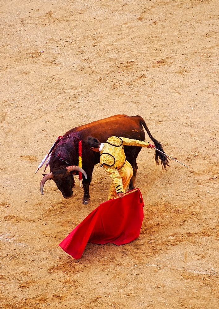 Bullfighting, Novillada Picada on the Bullring, Plaza de Toros de Las Ventas, Madrid, Spain, Europe