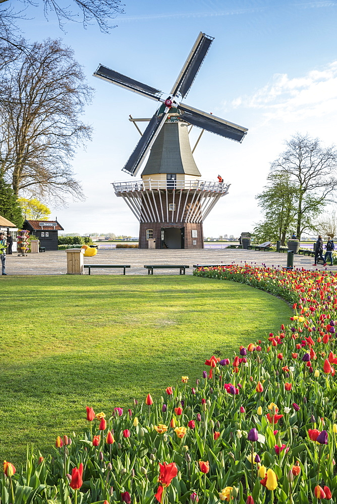 Windmill and tulips at Keukenhof Gardens, Lisse, South Holland province, Netherlands, Europe