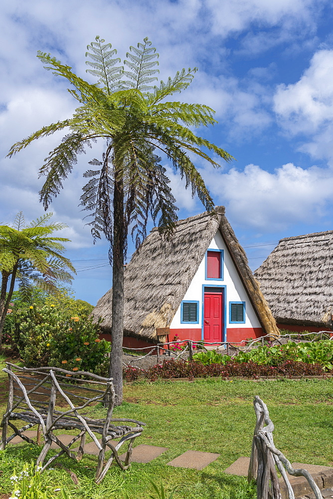Traditional house under a palm tree, Santana, Madeira region, Portugal, Europe - 1251-489