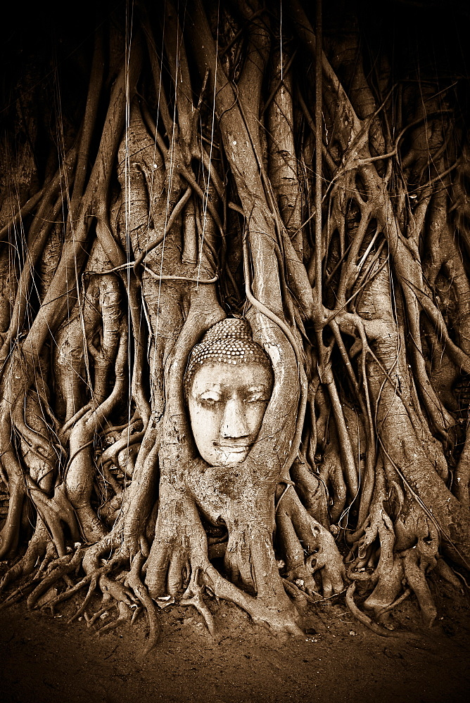 Stone Buddha head statue stands within the branches of a tree in a temple of Ayutthaya, UNESCO World Heritage Site, Thailand, Southeast Asia, Asia - 1262-21