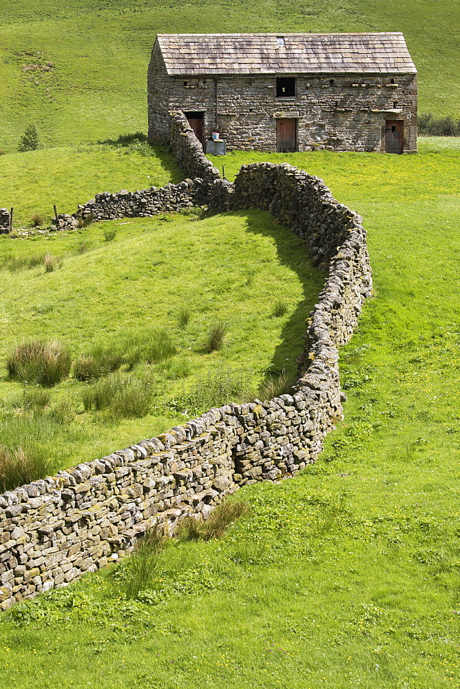 Traditional stone field barn or laithe at Angram, Swaledale, Yorkshire Dales, North Yorkshire, UK