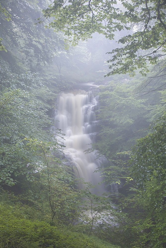 Misty conditions at Scaleber Force waterfall in Scaleber Wood, Settle, Ribblesdale, Yorkshire Dales, North Yorkshire, UK