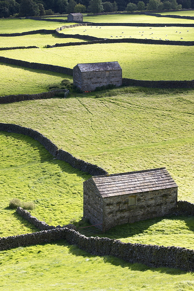 Stone field barns and dry stone walls at Gunnerside, Swaledale, Yorkshire Dales, Yorkshire, United Kingdom, Europe - 1266-97
