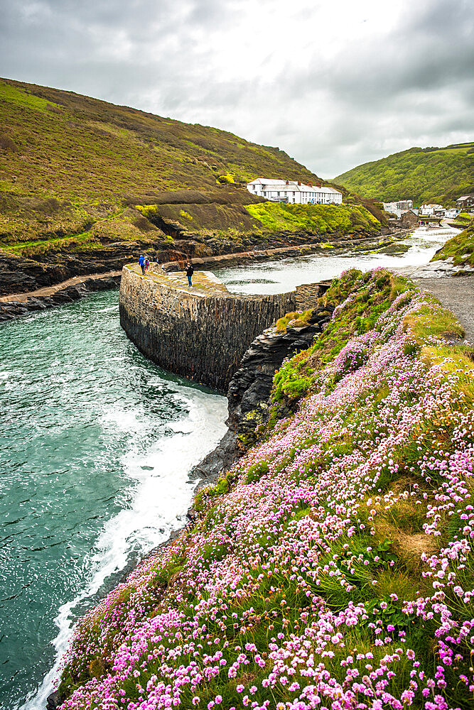 Flowers at Boscastle Harbour in Springtime, Atlantic coast, Cornwall, England, UK. - 1267-503