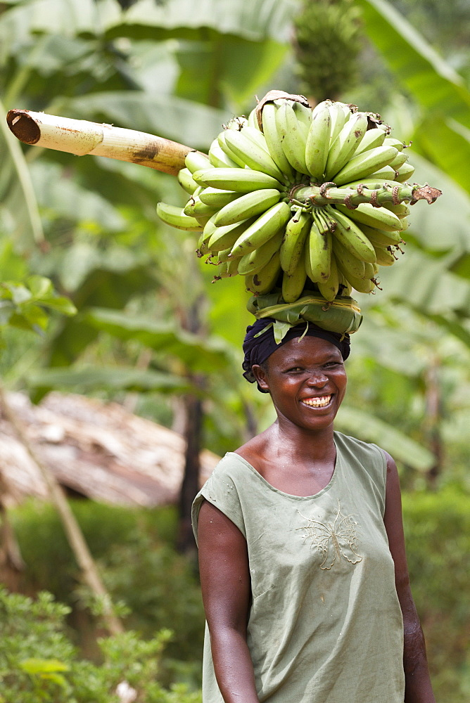 A portrait of a woman smiling and carrying a large bunch of bananas on her head, Uganda, Africa