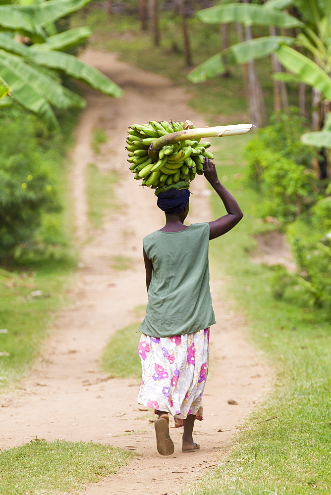A woman walks down a path carrying a large bunch of bananas on her head. - 1270-116