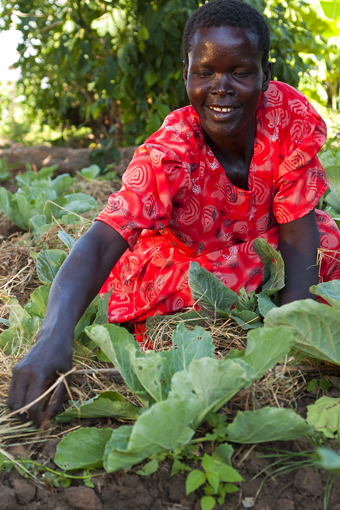 A female farmer checks on her cabbages, Uganda, Africa