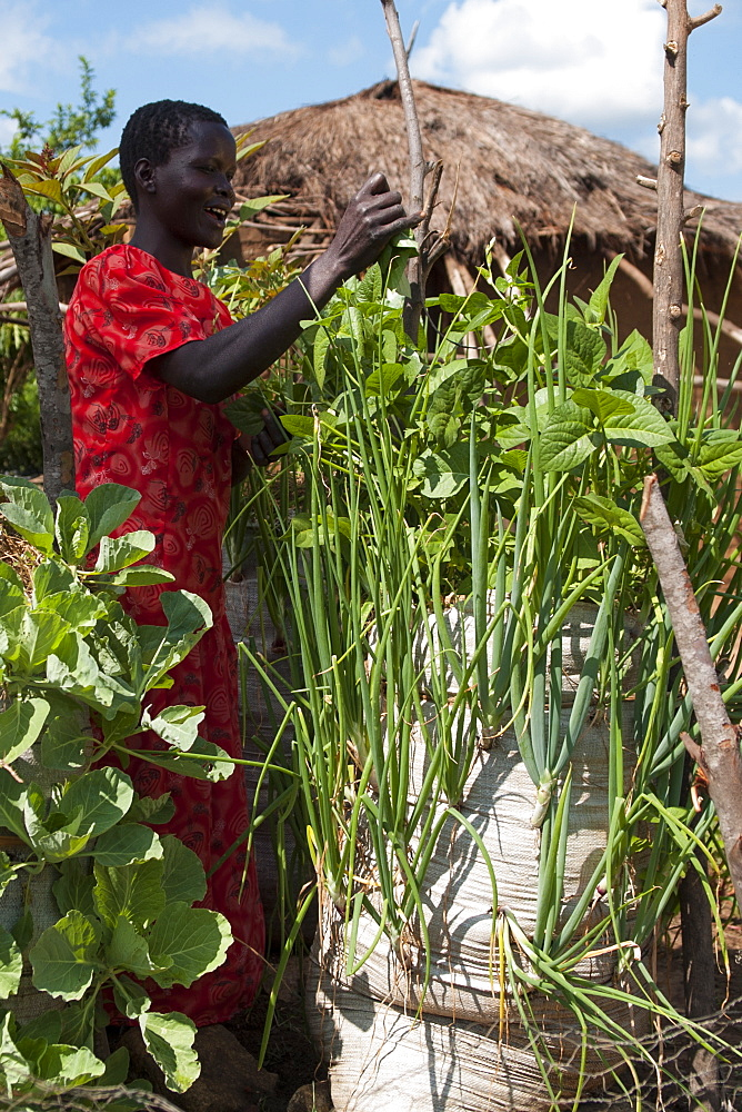 A female farmer tends to the vegetables growing in the sack garden outside her home compound.