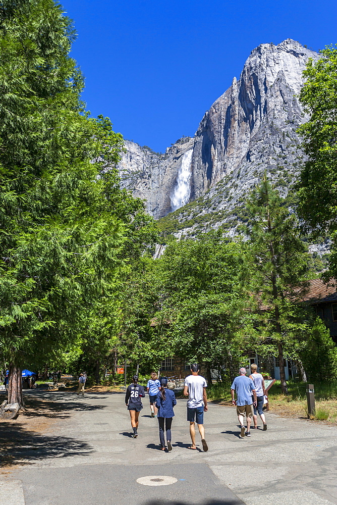 A view of Yosemite Falls from the Valley Visitor Center in Yosemite National Park, UNESCO World Heritage Site, California, United States of America, North America