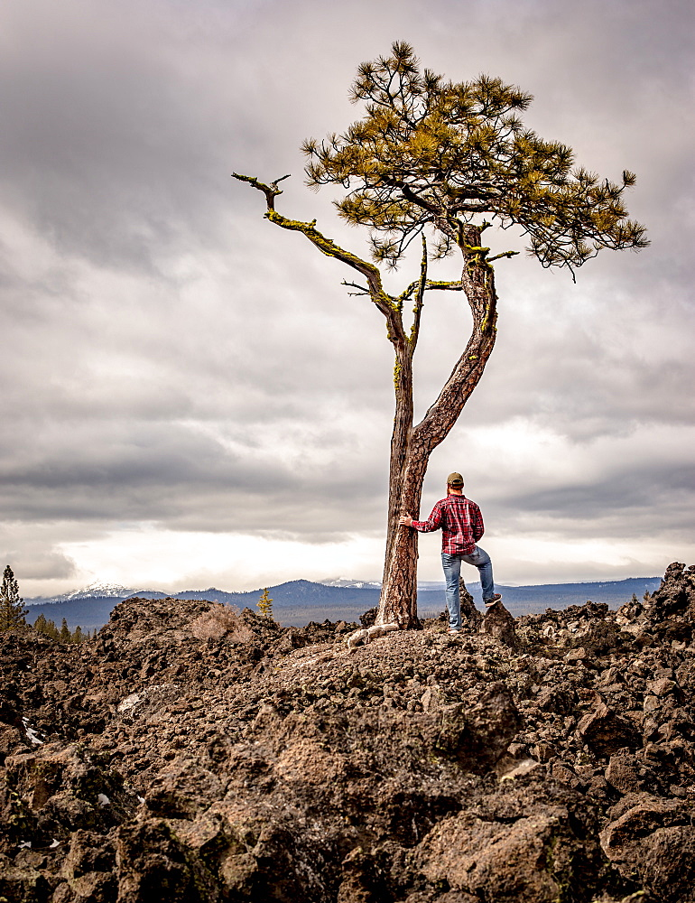 A man wearing flannel and blue jeans stands next to a solo tree in an old lava field, Oregon, United States of America, North America