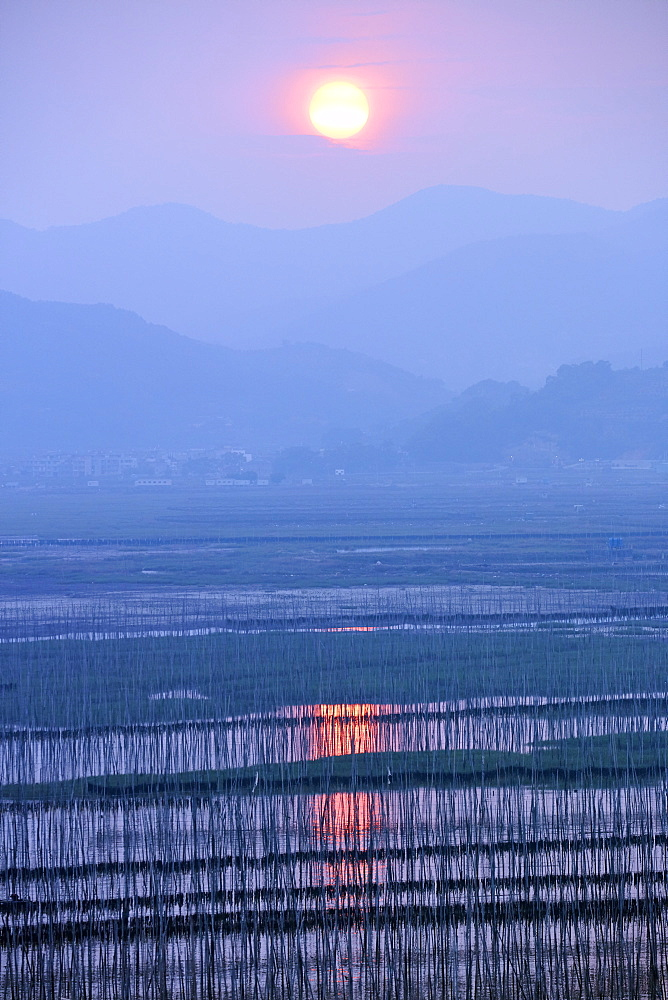 Sunset over Shajiang S Bay with endless rows of bamboo sticks to dry seaweed and kelp, Fujian, China, Asia - 1294-61
