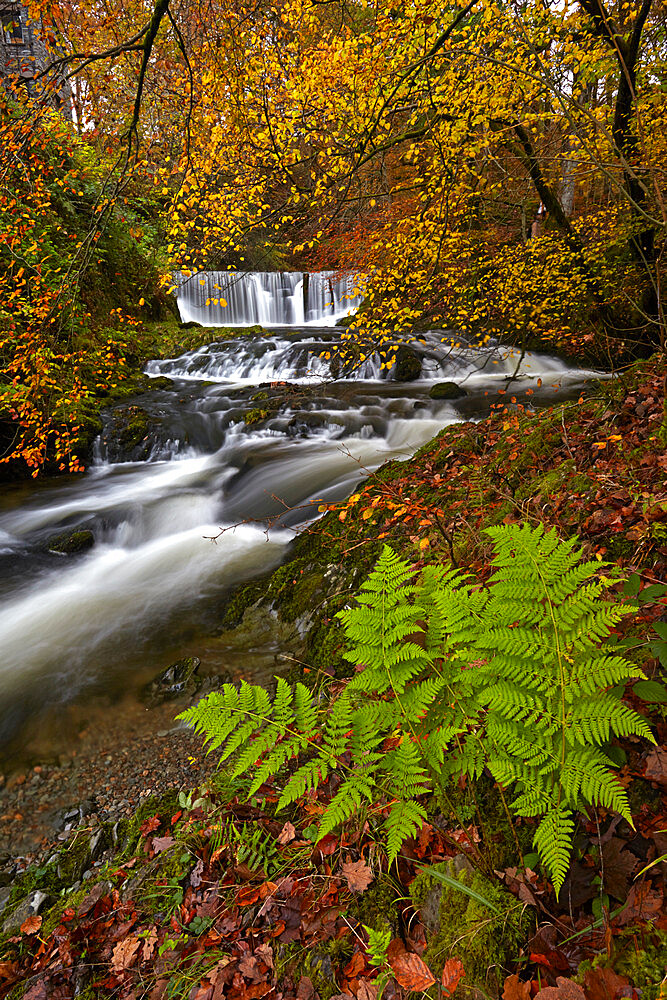 Autumn in Stock Ghyll near Ambleside, Lake District National Park, UNESCO World Heritage Site, Cumbria, England, United Kingdom, Europe - 1298-147