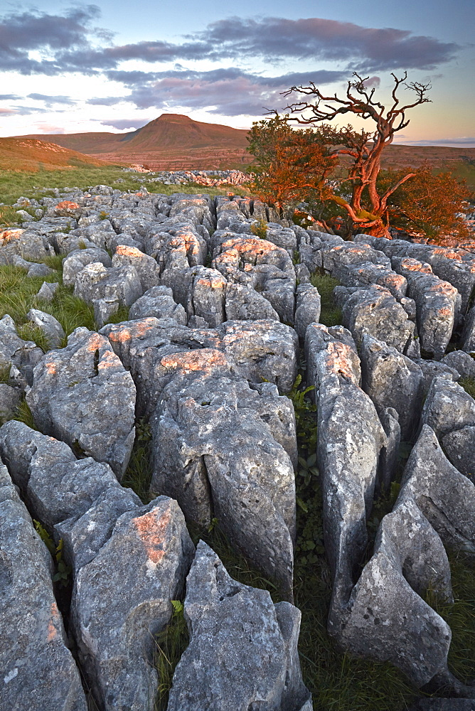 Ingleborough seen from the limestone pavement on Twistleton Scar, North Yorkshire, England, United Kingdom, Europe