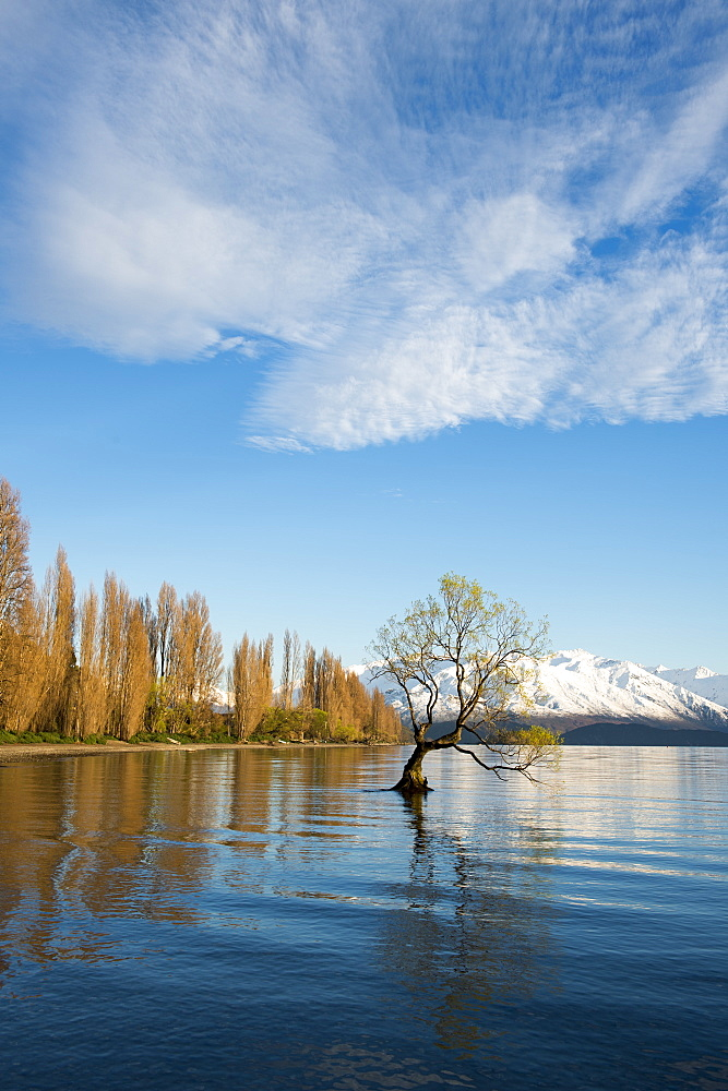 The Wanaka Tree at sunrise, Otago, South Island, New Zealand, Pacific