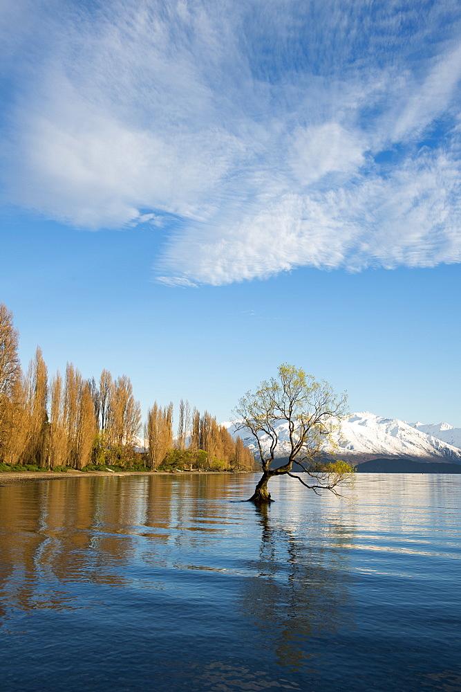 The Wanaka Tree at sunrise, South Island, New Zealand