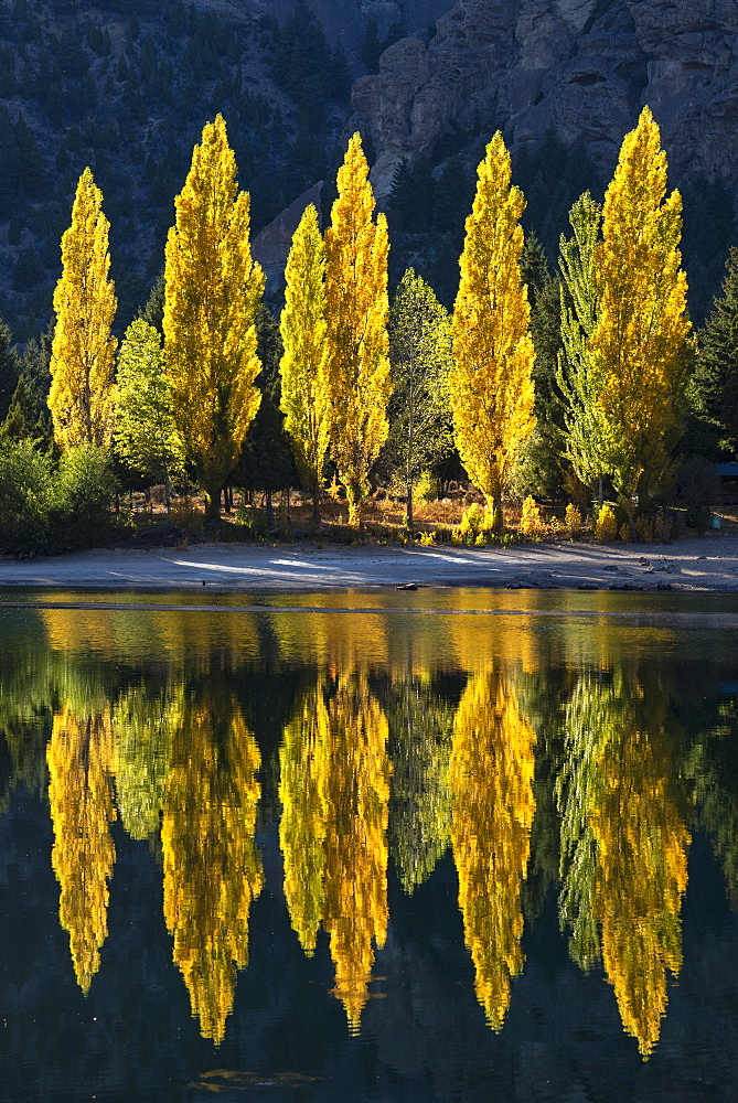 Reflection of poplar trees in autumnal colours, San Carlos de Bariloche, Patagonia, Argentina, South America