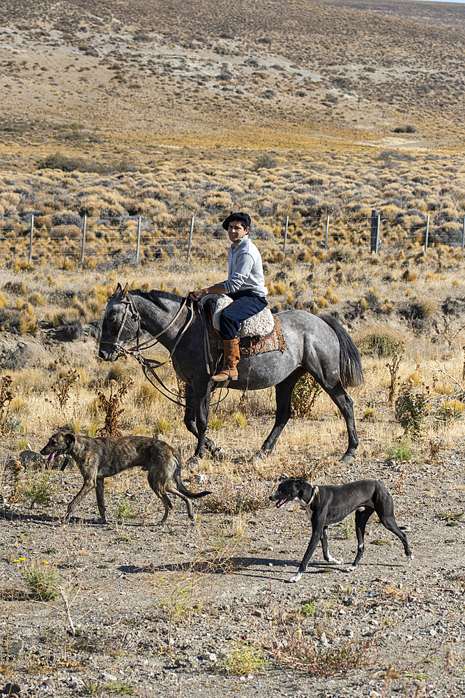 Gaucho riding his horse accompanied by dogs, El Chalten, Patagonia, Argentina, South America