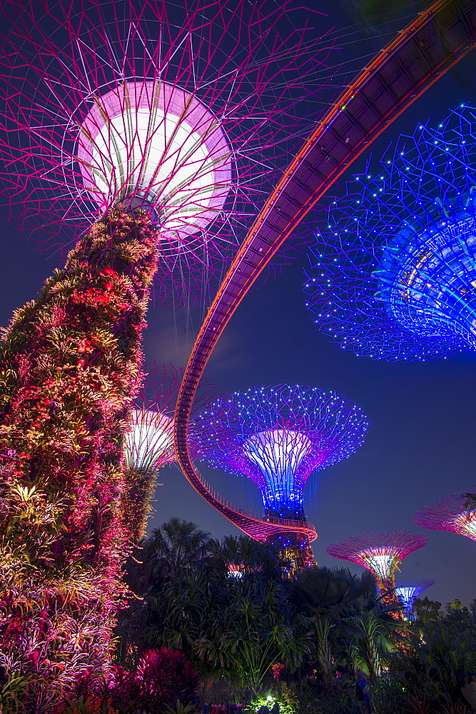 Supertrees of Gardens by the Bay with high level walkway, at night, Singapore, Southeast Asia, Asia
