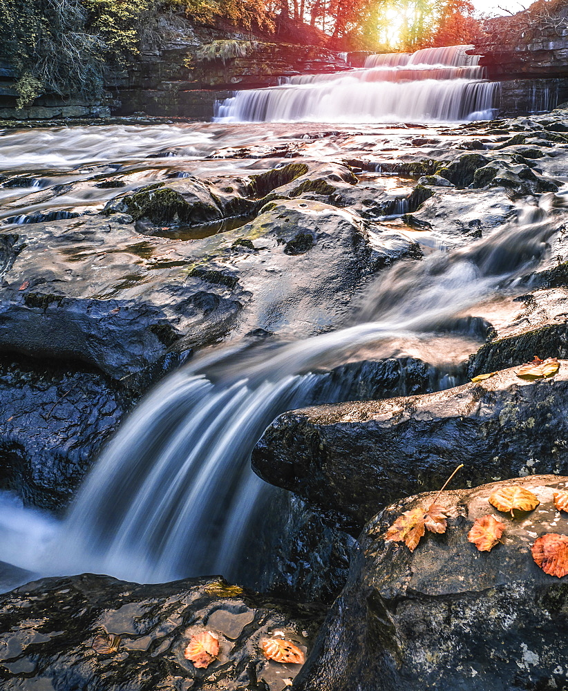Lower Aysgarth Falls on the River Ure, autumn, Wensleydale, Yorkshire Dales National Park, North Yorkshire, England, United Kingdom, Europe - 1309-17