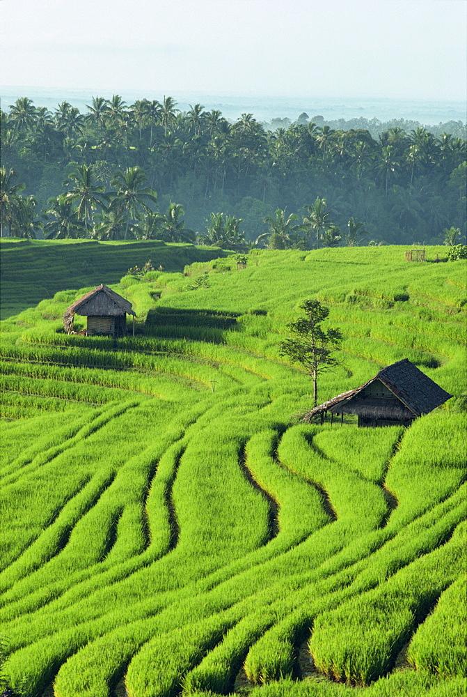 Landscape of lush green rice terraces on Bali, Indonesia, Southeast Asia, Asia - 142-2367