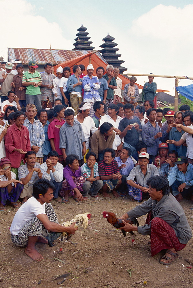 Illegal gambling, cock fighting, Bali, Indonesia, Southeast Asia, Asia - 142-4639