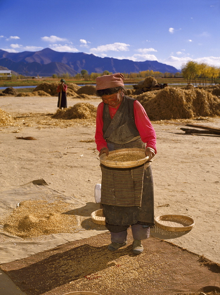 Woman winnowing wheat, Lhasa, Tibet, China, Asia