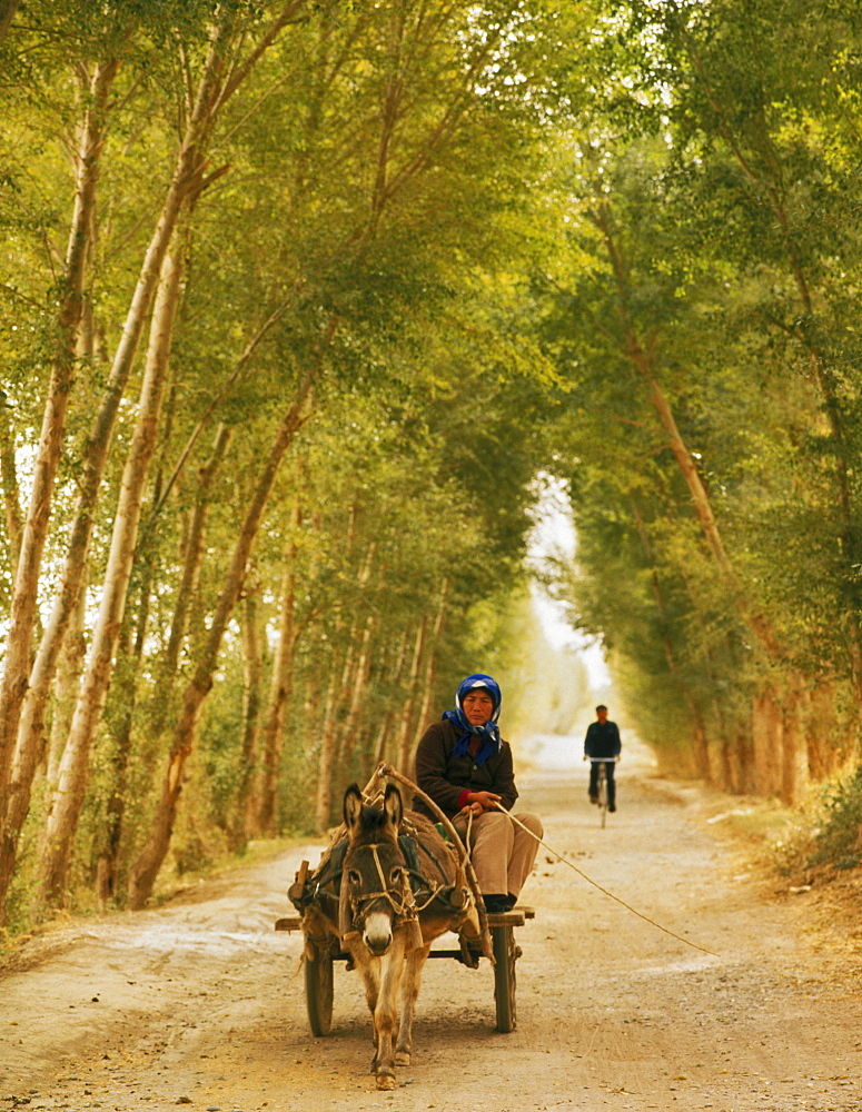 Woman riding donkey cart on a tree-lined road, with bicycle in distance, Dunhuang, Qinghai Province, China, Asia - 16-3298