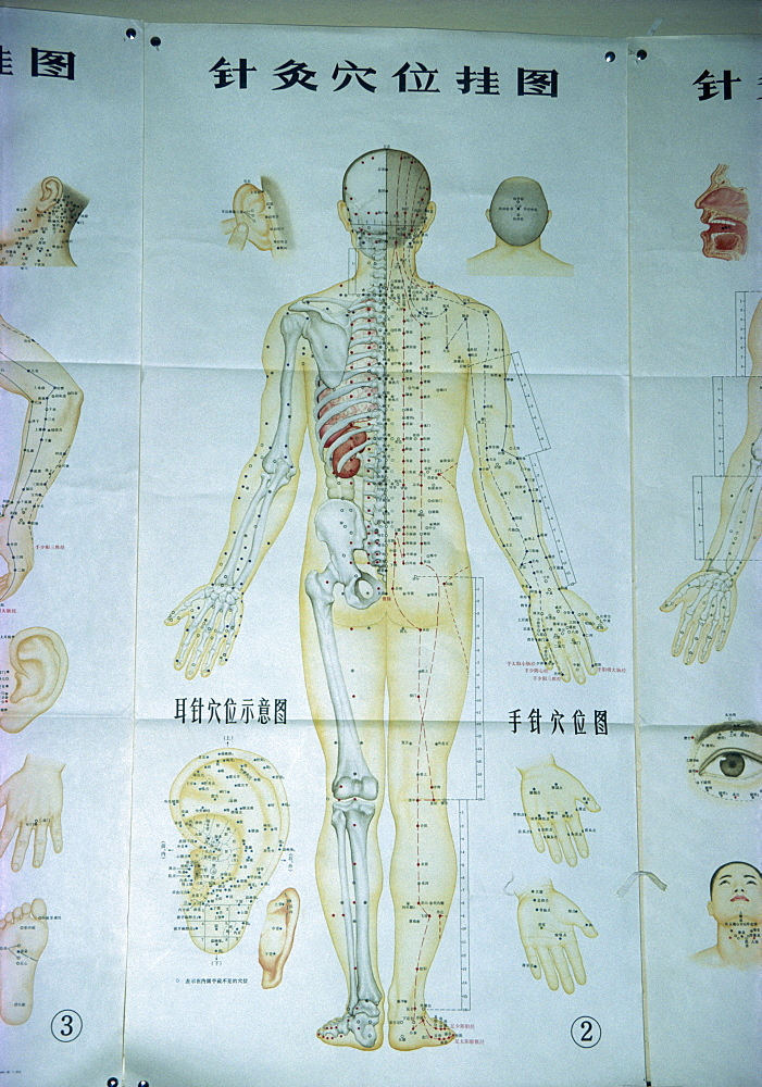 Illustration showing acupuncture points, China, Asia