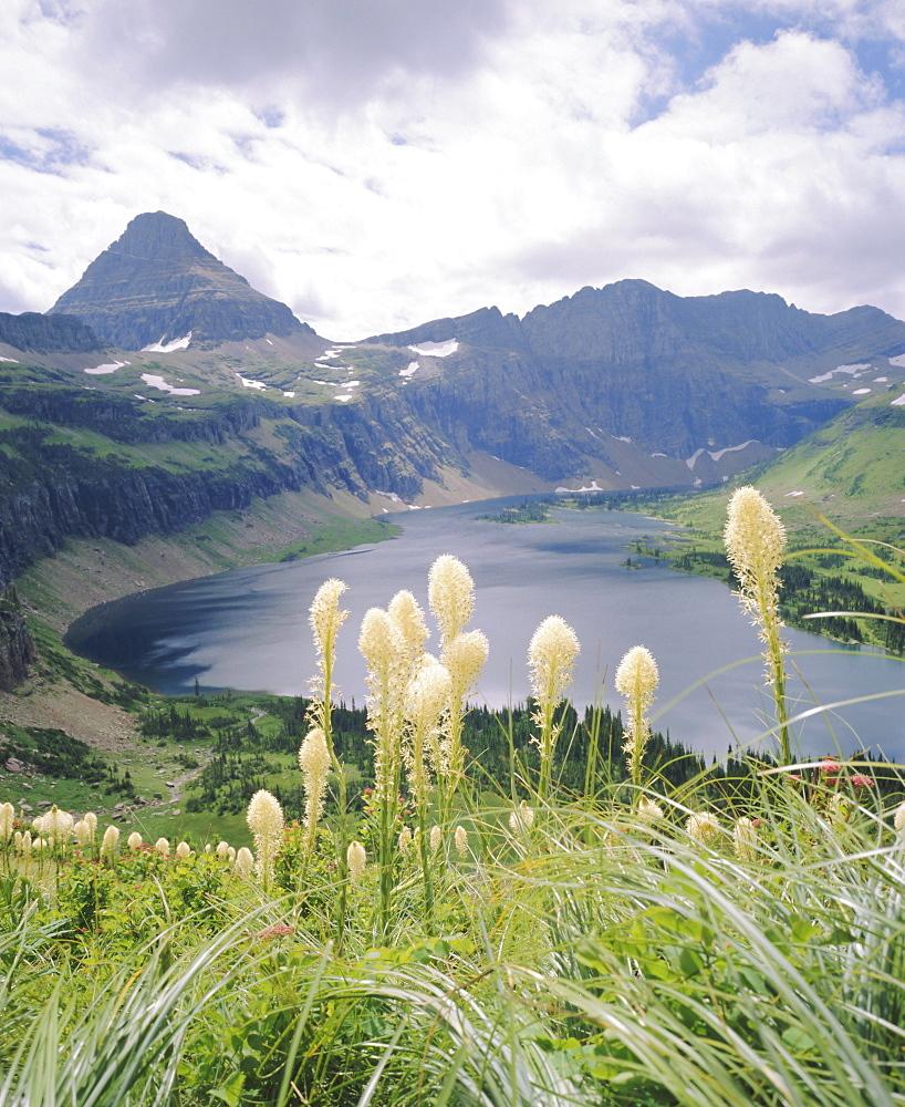 Beargrass, Hidden Lake and Mount Reynolds, Glacier National Park, Montana, USA