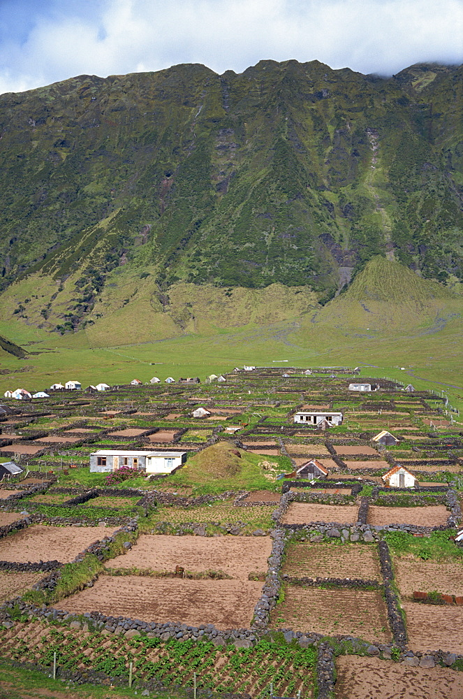 Stone walls divide potato patches, two miles south of settlement, on Tristan da Cunha, Mid Atlantic
