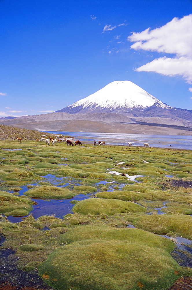 Chile, Andes, Lauca National Park, Lake Chungara And Volcan Parinacota, 6300m *** Local Caption ***